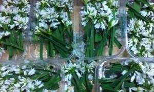 Barquettes composées de fleurs d'ail de couleur blanche