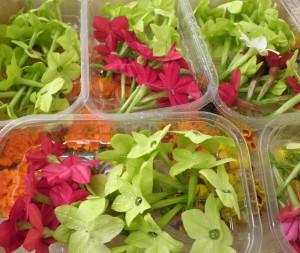 Barquettes de fleurs de tabac en mélange