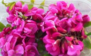 Barquette de fleurs d'acacia comestible de couleur rose
