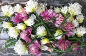 barquette de fleurs  de ciboulettes en mélange de couleur blanche et mauve