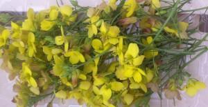 barquette-fleurs-de-roquette