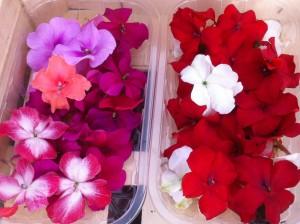 Barquettes de fleurs d'impatiens en mélange
