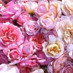 roses-en-melange
