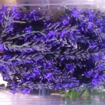 barquette-fleurs-de-lavande